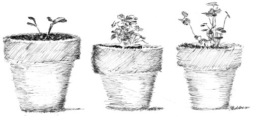 3_pots_w_seedlings